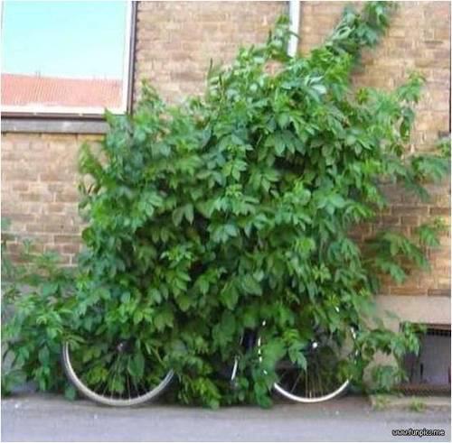 bike ninja 2